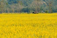 Gelber Blumengarten Lizenzfreies Stockfoto