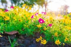 Gelber Blumenhintergrund mit Licht von der Sonne Stockfotos