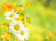 Gelber Blumenhintergrund und orange Blume Kamille und globeflower Stockfotografie
