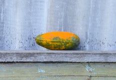 Gelber Eierkürbis auf einer Holzbank Lizenzfreies Stockfoto