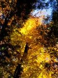 Gelber Fall stockfotos
