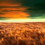 Gelber Feld- und Wolkenhimmel Lizenzfreie Stockbilder