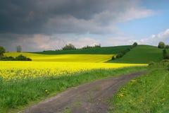 Gelber Feldraps in der Blüte mit blauem Himmel und Dunkelheit Stockfotos