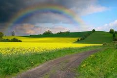 Gelber Feldraps in der Blüte mit Himmel und Regenbogen Stockfotos
