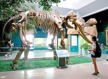 Gelber Fluss-Elefant-Fossil Stockfotos