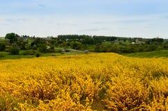 Gelber Frühling Stockfoto