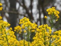 Gelber Frühling Stockfotos