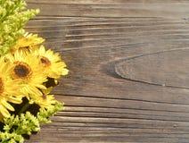 Gelber Gänseblümchen-Holz-Hintergrund Lizenzfreie Stockbilder
