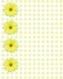 Gelber Gänseblümchenhintergrund Lizenzfreies Stockfoto