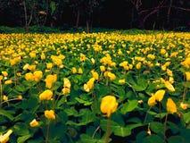 Gelber Garten gegen grünen Garten stockbilder