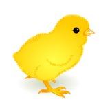 Gelber gewordener Vogel Lizenzfreies Stockfoto