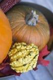 Gelber Gurde und orange Kürbise für Danksagung lizenzfreie stockbilder