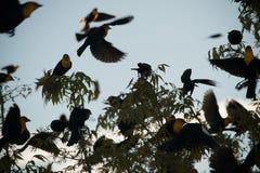 Gelber Hauptvogel Lizenzfreies Stockfoto