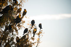 Gelber Hauptvogel Lizenzfreie Stockfotografie