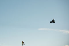 Gelber Hauptvogel Lizenzfreie Stockbilder
