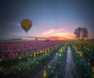 Gelber Heißluftballon über Tulpenfeld morgens tranquili Stockbilder
