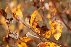 Gelber Herbst lizenzfreies stockbild
