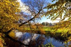Gelber Herbst im Wald über Fluss Stockfoto