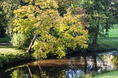 Gelber Herbstbaum Lizenzfreie Stockfotos