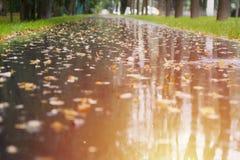 Gelber Herbstblathintergrund stockfotos