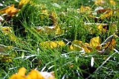 Gelber Herbstlaub lizenzfreie stockfotos