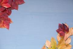 Gelber Herbstlaub auf grauem blauem Hintergrund z lizenzfreies stockbild