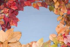 Gelber Herbstlaub auf grauem blauem Hintergrund z lizenzfreies stockfoto