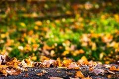 Gelber Herbstlaub, der auf einem Stein und einem grünen Gras liegt stockbilder
