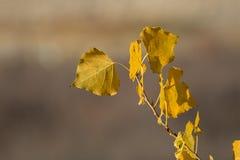 Gelber Herbstlaub mit unscharfem Hintergrund lizenzfreie stockfotos