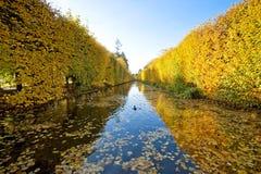 Gelber Herbstpark Stockbild