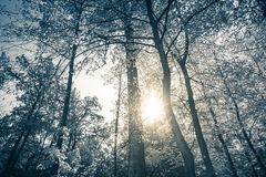 Gelber Herbstwald Stockbilder
