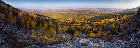Gelber Herbstwald Lizenzfreie Stockfotografie
