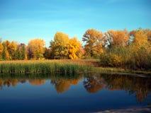 Gelber Herbstwald reflektiert im Fluss Lizenzfreie Stockfotos