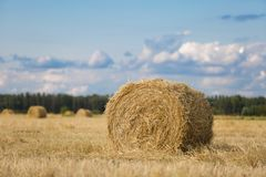 Gelber Heuschober auf Weizenfeld unter dem schönen blauen bewölkten Himmel stockfotos