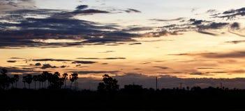 Gelber Himmel vor Sonnenuntergang über Schattenbaum auf dem Reisgebiet am Abend Stockfotos