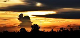 Gelber Himmel vor Sonnenuntergang über Schattenbaum auf dem Reisgebiet am Abend Lizenzfreies Stockfoto