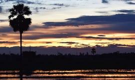 Gelber Himmel vor Sonnenuntergang über Schattenbaum auf dem Reisgebiet am Abend Lizenzfreie Stockbilder