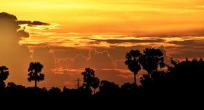 Gelber Himmel vor Sonnenuntergang über Schattenbaum auf dem Reisgebiet am Abend Stockbilder
