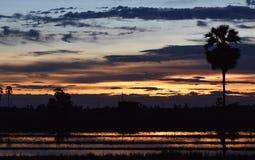 Gelber Himmel vor Sonnenuntergang über Schattenbaum auf dem Reisgebiet am Abend Lizenzfreie Stockfotos