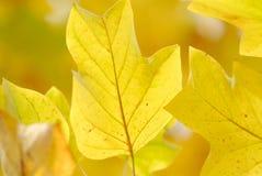 Gelber Hintergrund Stockfoto