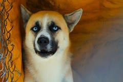 Gelber Hund Stockfoto