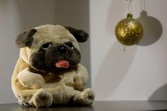 Gelber Hund 2018 lizenzfreie stockfotos