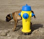 Gelber Hydrant und ein Hund Stockfoto