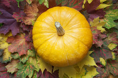 Gelber Kürbis auf dem Herbstlaub Lizenzfreie Stockfotos
