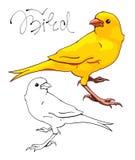 Gelber Kanarienvogel Lizenzfreies Stockfoto