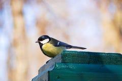 Gelber kleiner Vogel auf Zaun im Park Meisevogel in Russland Wildlif lizenzfreie stockbilder