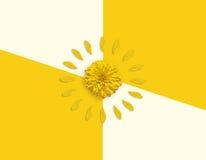 Gelber Kreisrahmen von Blumenblättern auf gelbem Hintergrund und grünem Blatt Flaches Bild Lizenzfreies Stockbild