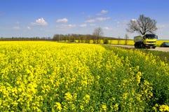Gelber LKW, der gelbe Frühlingsfelder der Straße fährt Lizenzfreie Stockbilder