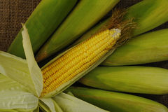 Gelber Mais Stockbild
