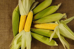 Gelber Mais Lizenzfreie Stockfotos